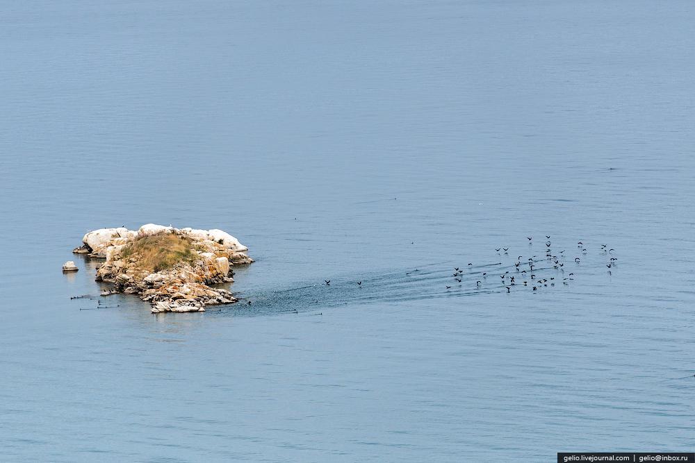 На Байкале водится 236 видов птиц. Из них 29 водоплавающих, главным образом различные виды уток, стаи которых часто встречаются во время плавания по Байкалу. Реже на берегах Байкала можно встретить гусей, лебедей-кликунов.