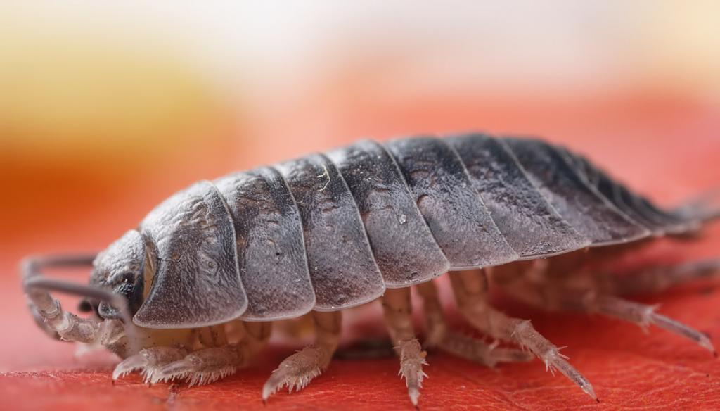 Самые неприятные виды насекомых, которые живут в квартире