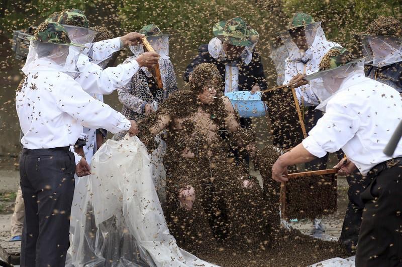 3. Наибольшее количество пчел на теле человека Китаец Гао Бинго покрыл свое тело 236 000 живых пчел.