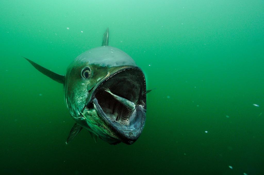 Редкие подводные кадры исчезающей морской жизни