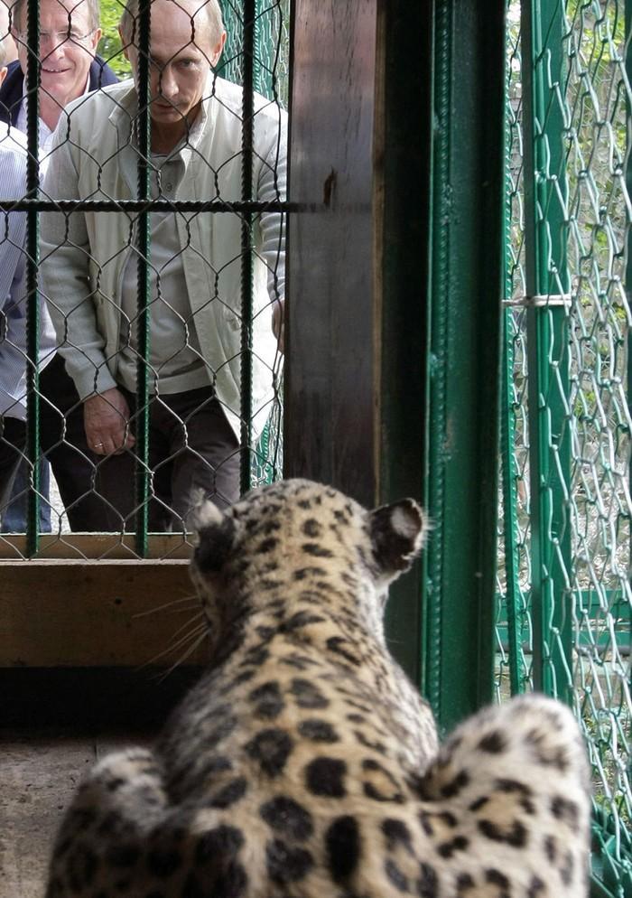 Путин смотрит на леопарда. (REUTERS A© RIA Novosti/Reuters)