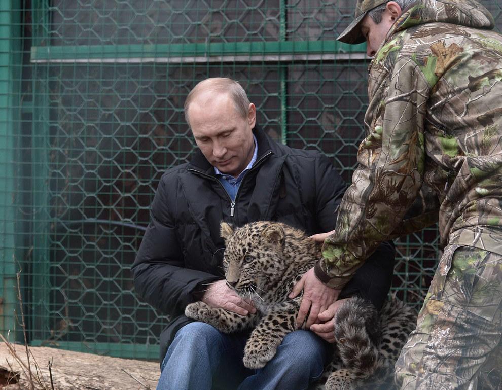 Он просто прелесть (мы про леопарда). (RIA Novosti/Reuters)