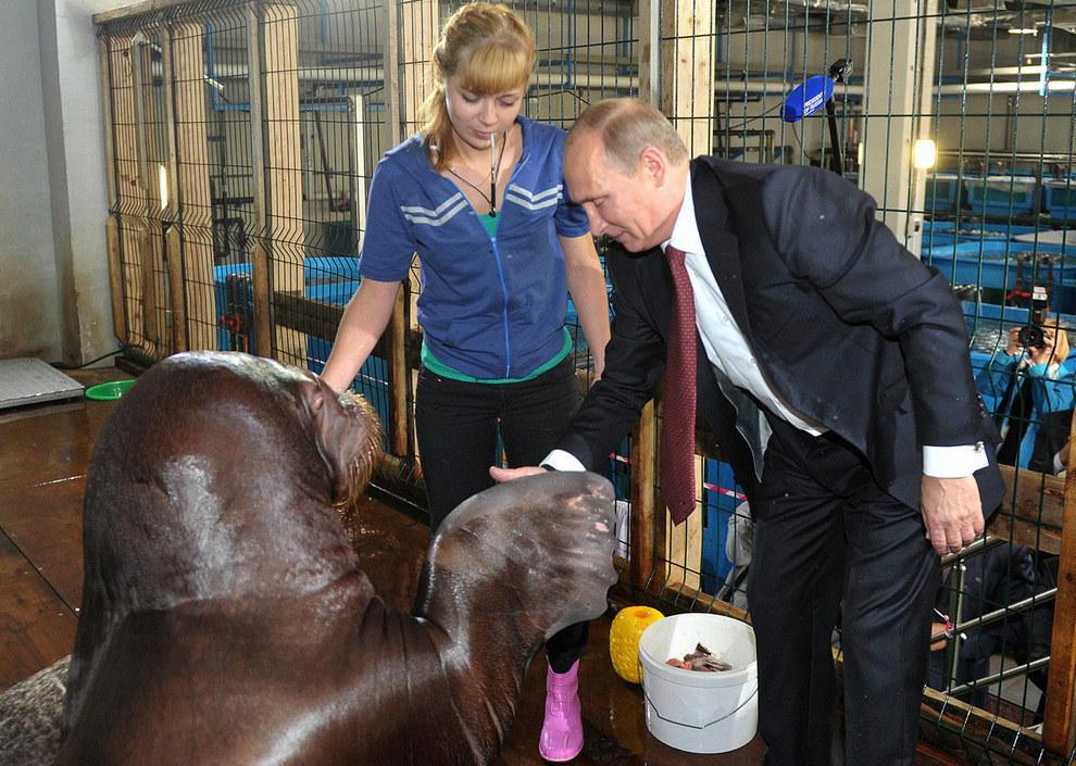 Путин смотрит на единственную лапу, которая может победить его в армрестлинге. (RIA Novosti/Reuters)