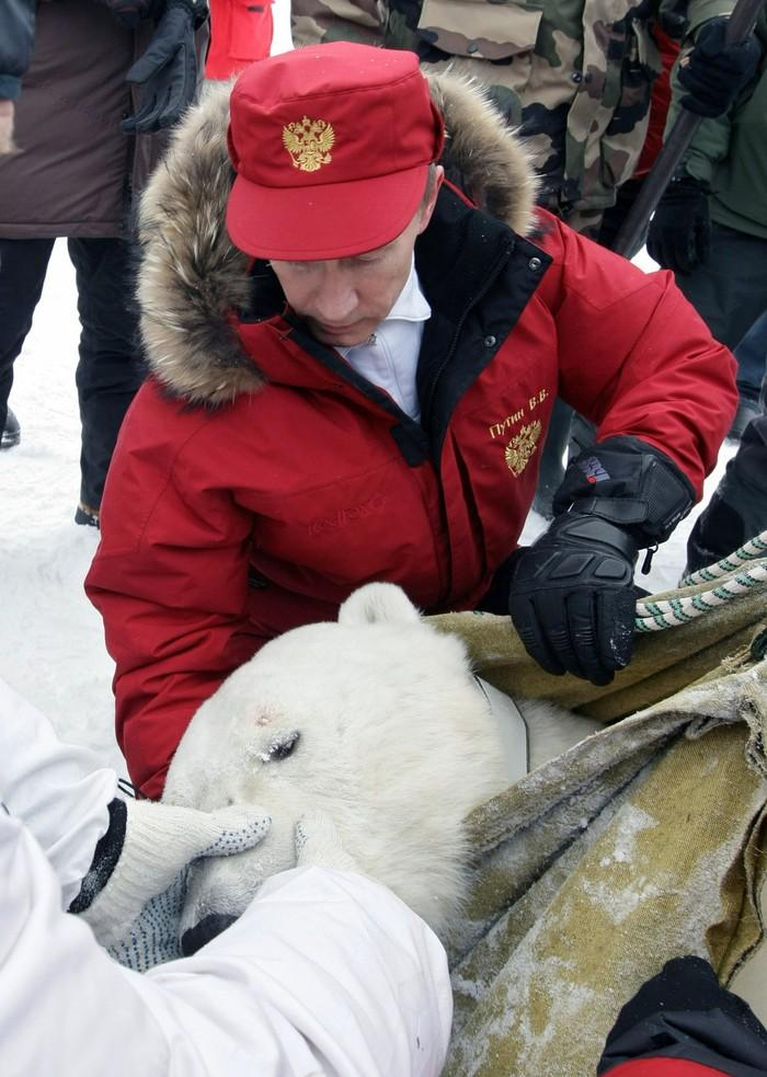Путин смотрит на белого медведя, которого он только что НЕ убил. Абсолютно точно. (RIA Novosti/Reuters)