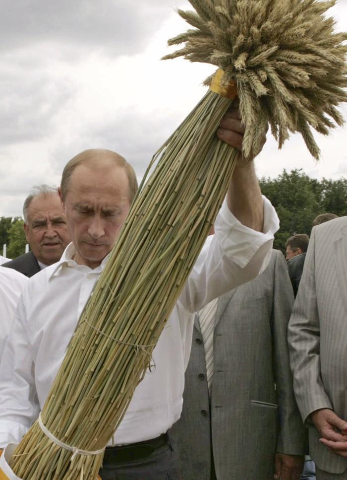 Путин смотрит на впечатляющие колосья пшеницы. (RIA Novosti/Reuters)