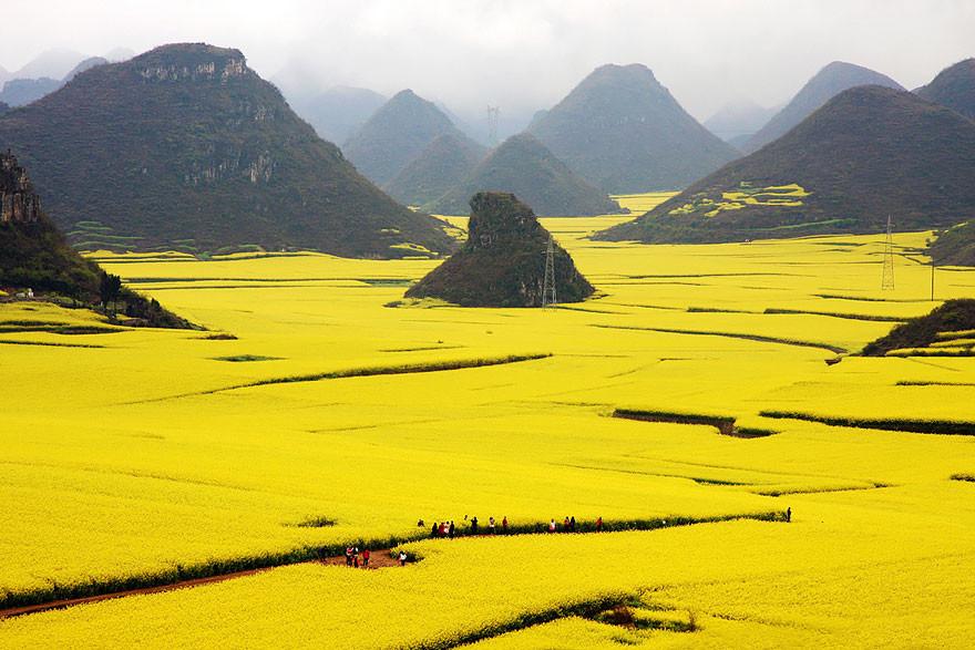 Рапсовые поля в области Люпин, провинция Юньнань
