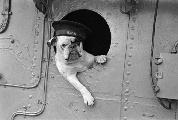 15 животных, принимавших активное участие во Второй мировой войне