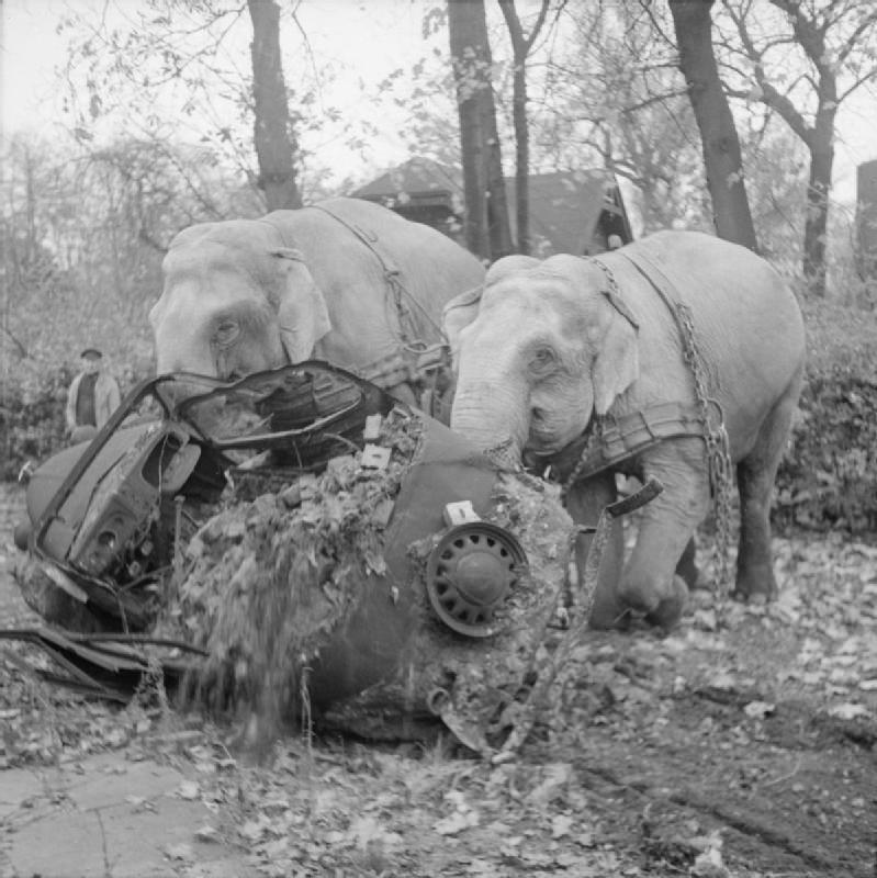 Цирковые слоны Кири и Мэни участвуют в уборке мусора с улиц разбомбленного Гамбурга. Германия, ноябрь 1945 года.