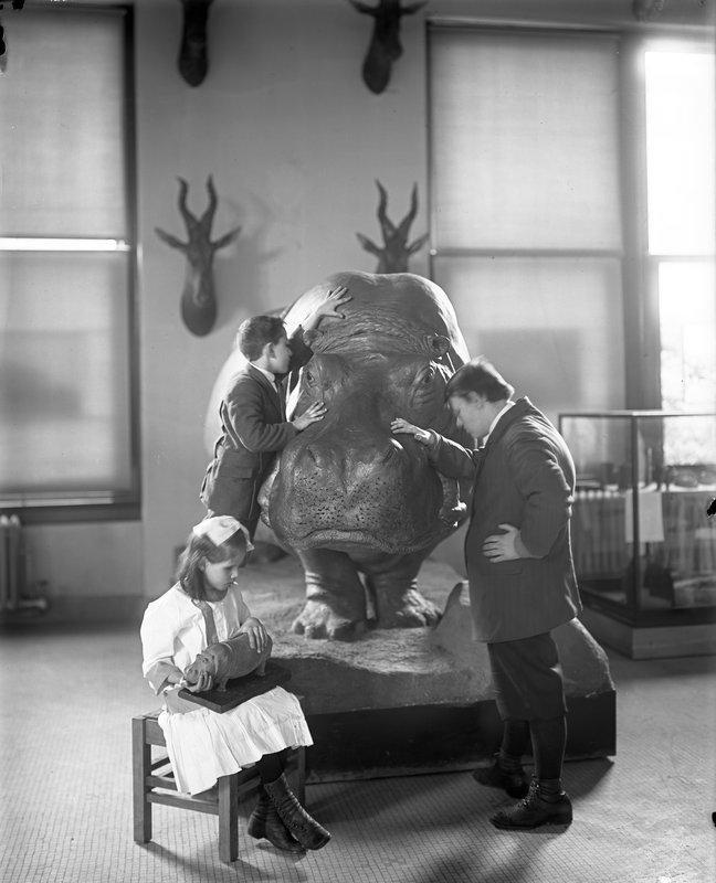 Слепые дети изучают гиппопотама в Американском Естественно–историческом музее, 1914 год.