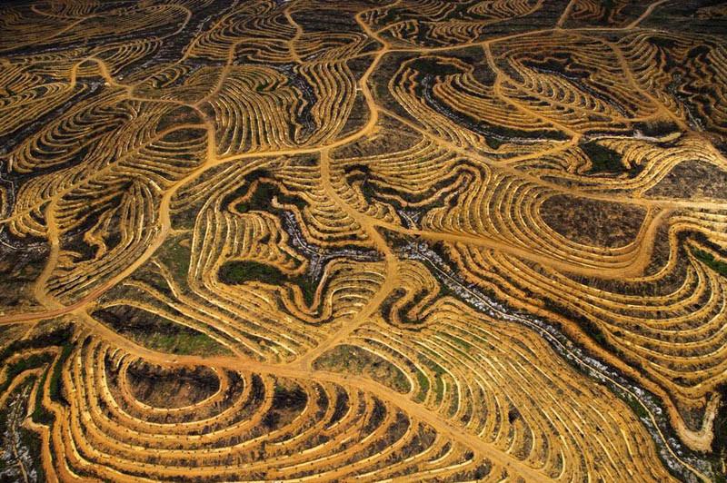 12. Пальмовые плантации, Борнео, Индонезия