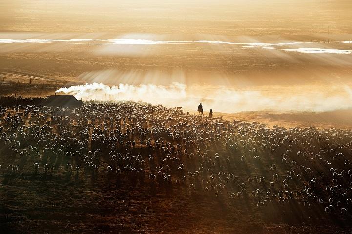 13. Поощрительная премия — «Утренний выпас» (автор: Лиминг Цао, Китай). Семья пастухов, получив кредитную поддержку, выкупила тысячи овец. Они зарабатывают на продаже шерсти и шкур овец и козьего молока.