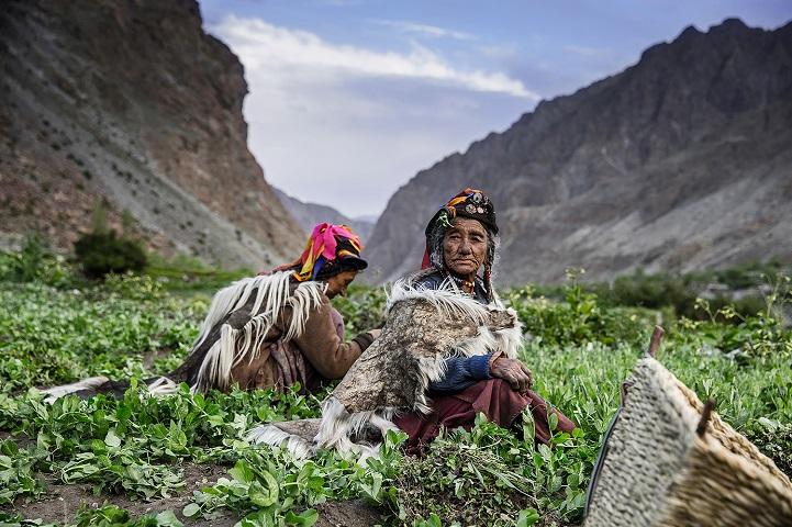 16. Победитель в категории «Малый семейный бизнес» — «Работа в горах» (автор: Татьяна Шарапова, Россия). Пожилые ладакхские женщины работают на поле высоко в горах. Они выращивают овощи на продажу на местном рынке в Ладакхе, на севере Индии.