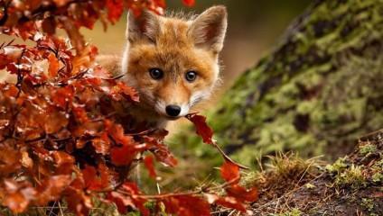 15 животных, которые наслаждаются магией осени
