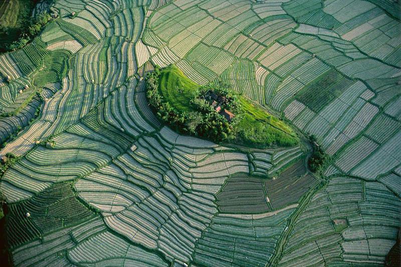 2. Островок среди рисовых террас на Бали, Индонезия