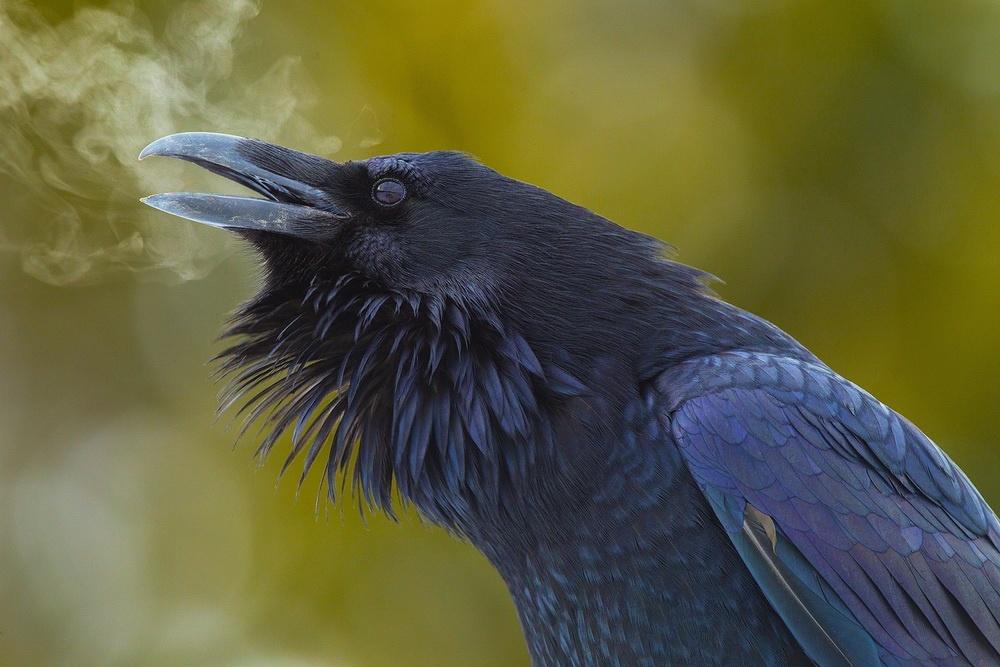 Дыхание ворона.
