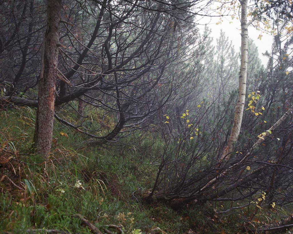 Снайпер скрылся под мшистым покровом за небольшим деревом с изогнутым стволом на левой стороне изображения.