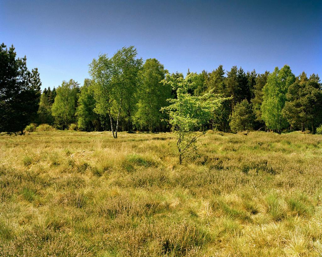 Снайпер на небольшом холме возле края леса, на правой части изображения.