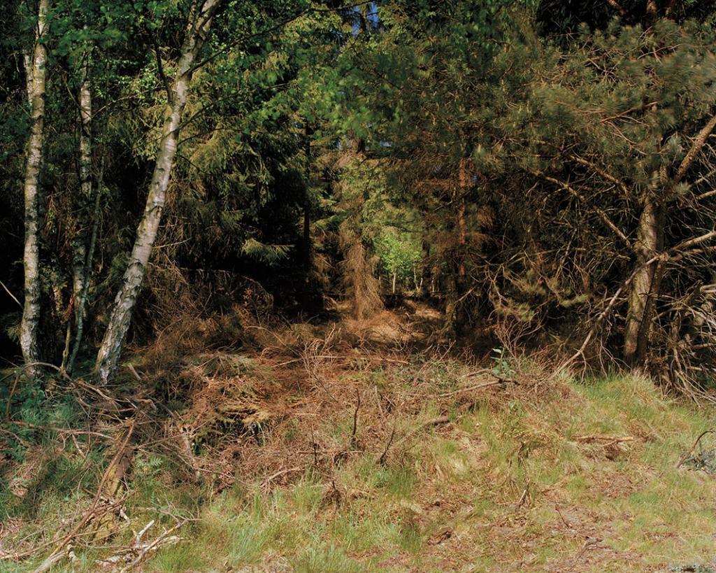 Снайпер находится под зарослями и ветвями слева.