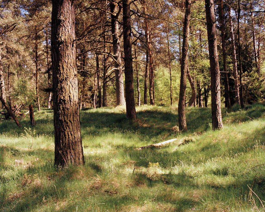 Снайпер справа за бревном на земле рядом со вторым деревом.