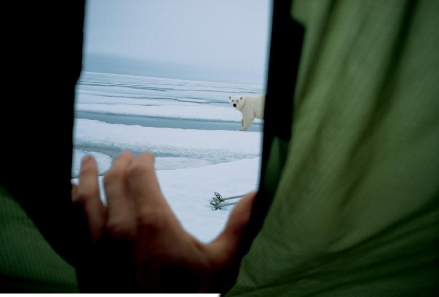 Белый медведь заинтересовался палаткой двух путешественников, которые вознамерились покорить Землю Франца-Иосифа (архипелаг в Северном Ледовитом океане) по стопам норвежского полярного исследователя Фритьофа Нансена, который проделал этот же путь 112 лет назад.