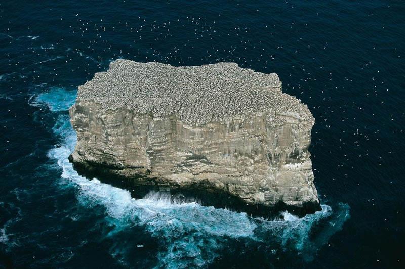 6. Колонии бакланов на острове Элдей, Исландия