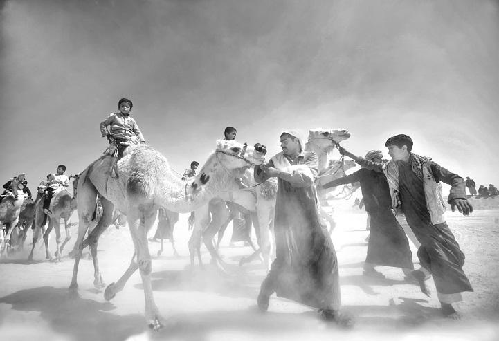 8. Поощрительная премия — «Рынок верблюдов» (автор: Мохамед Камаль, Египет). Торговцы верблюдами входят на рынок в Египте.