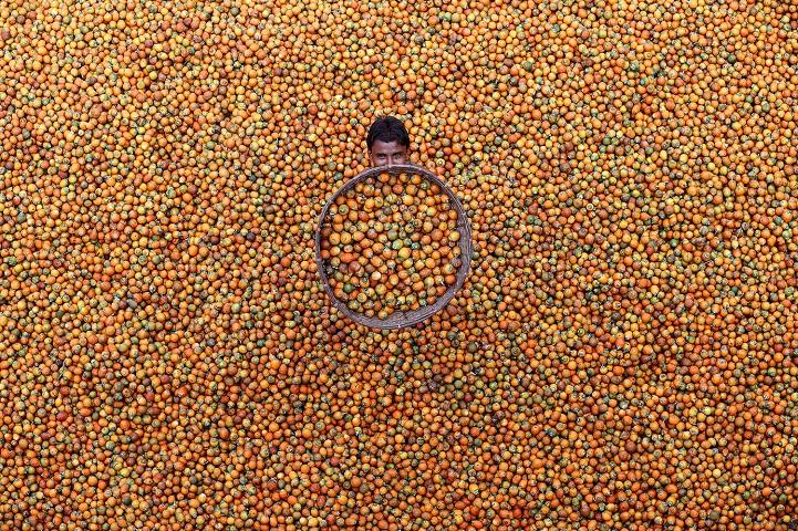 9. Поощрительная премия — «Орех катеху» (автор: М. Юсуф Тушар, Бангладеш). Работающий сам на себя мужчина готовит орехи катеху для продажи на местном рынке в Текнафе, Бангладеш. Он решил проблему безработицы, сажая и собирая плоды бетелевой пальмы.