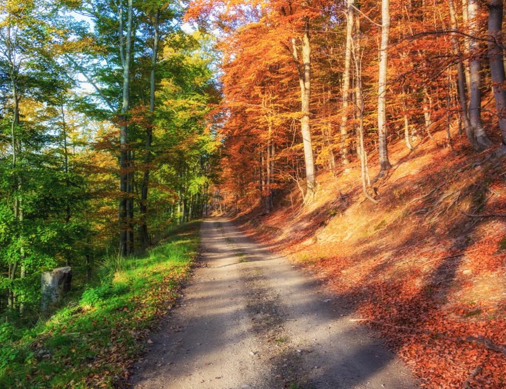 Осенний лес. Уровень загрузки: 50%.