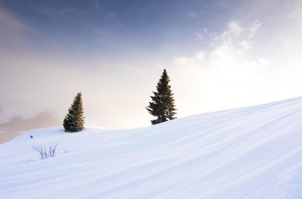Снежный день в горах Колорадо, США.