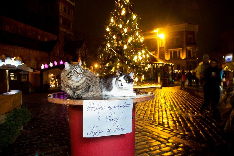 """""""За прошедшие выходные коты успели сфотографироваться на столе у мэра, на рождественской ярмарке на Домской площади, в номере гостиницы в Старом городе, в рыбном павильоне Центрального рынка, в баре, где подают """"Рижский бальзам"""", со стражем у средневекового ресторана, в национальном художественном музее. Все эти места коты очень настойчиво рекомендуют посетить российским туристам. Ну за исключением кабинета мэра"""", — пишет Нил Ушаков."""