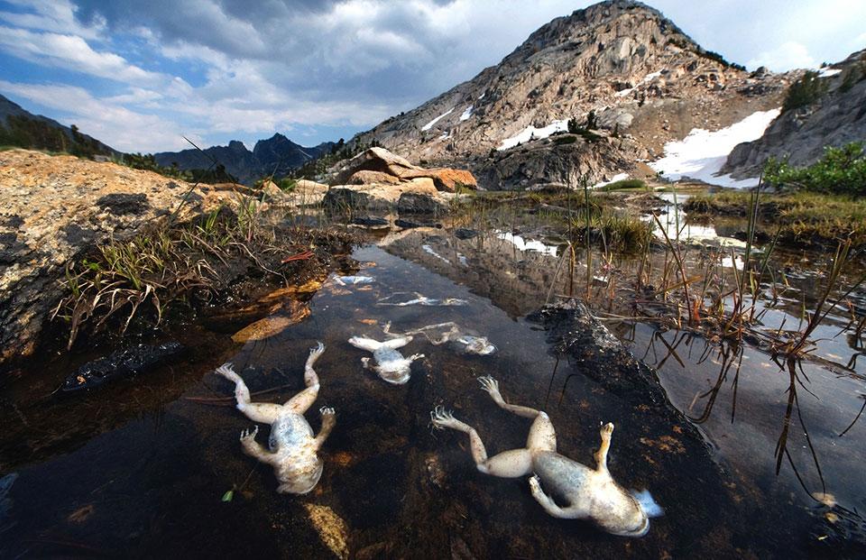 Кингс-Каньон — национальный парк США. Исчезающие амфибии.