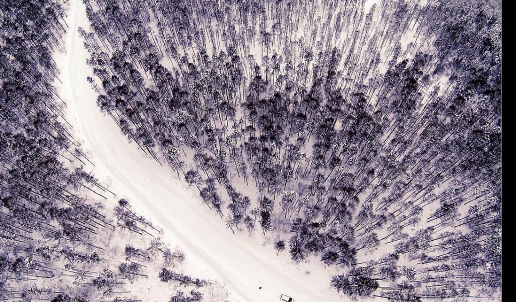 Замороженный лес