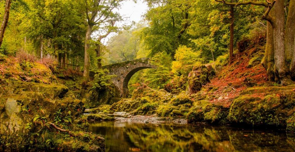 Северный Лес Лес Толлимор, Северная Ирландия