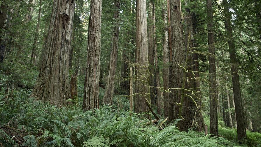 3. Планета Эндор — Калифорния