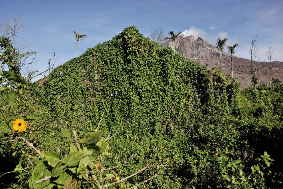 Это не холм, это заброшенный дом, уже полностью поглощённый природой. Деревня Sibintun, 12 ноября 2015. (Фото Binsar Bakkara):