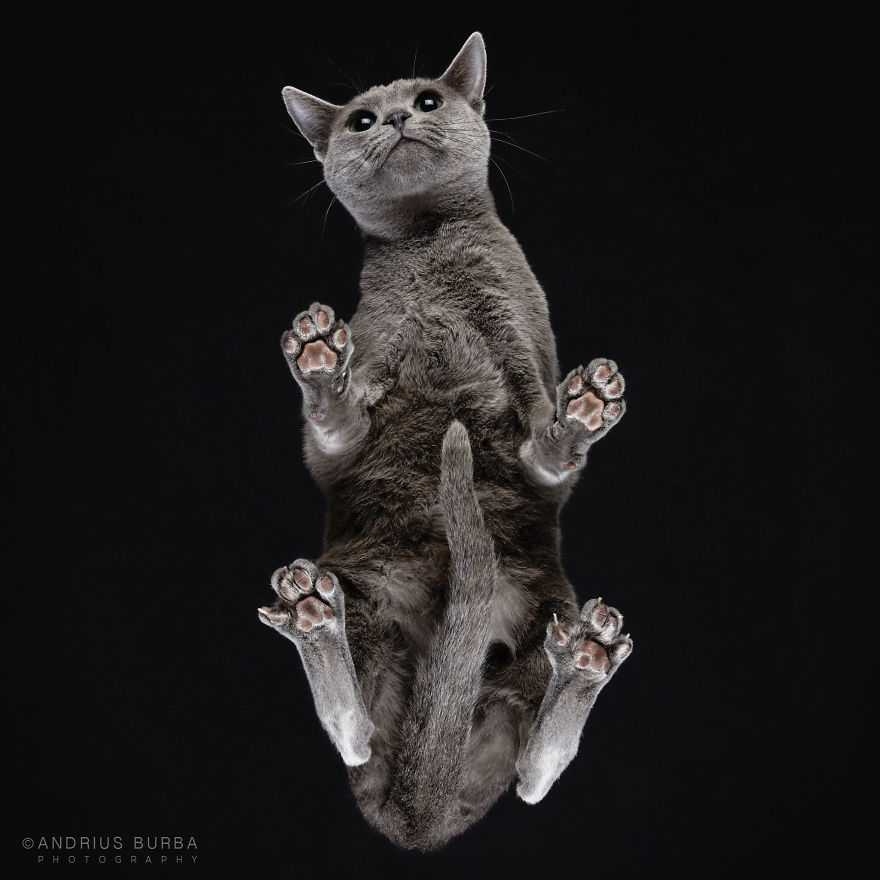 25-photos-of-cats-taken-from-underneath-10__880