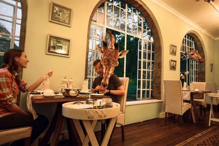 С жирафом за одним столом