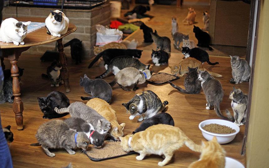Кота первого в домашних условиях 325