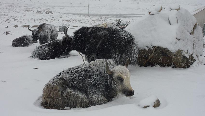 Лхюндзе, Тибет 2008 — 182 сантиметра снега