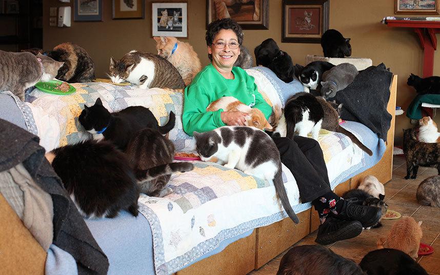 Как живет женщина, у которой более тысячи котов