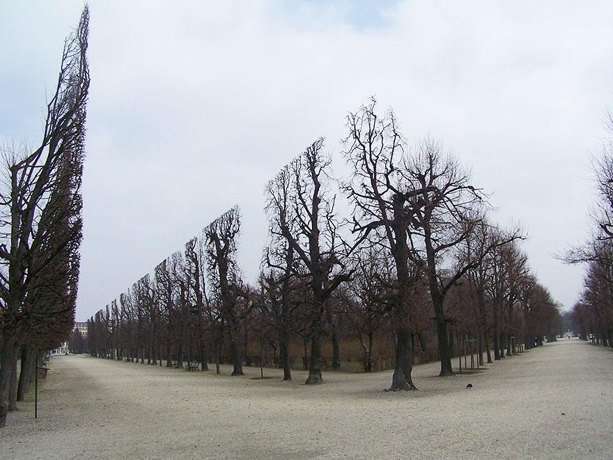2. Деревья в парке Шенбрунн
