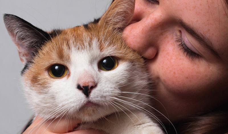 Наличие кота