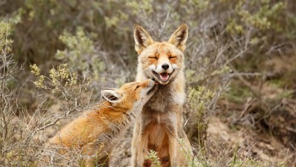 Влюбленный животный мир