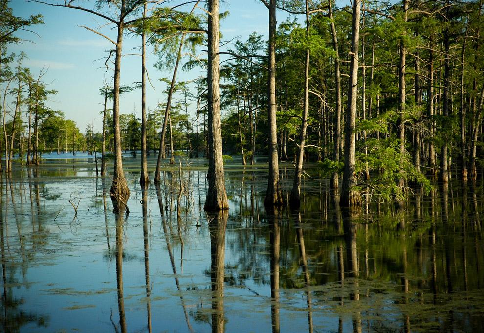 5. Луизиана, США: жизнь на болоте