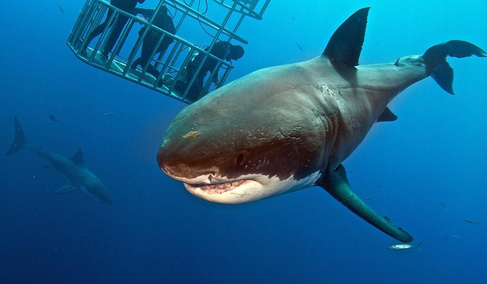 Как потрогать и покормить акулу