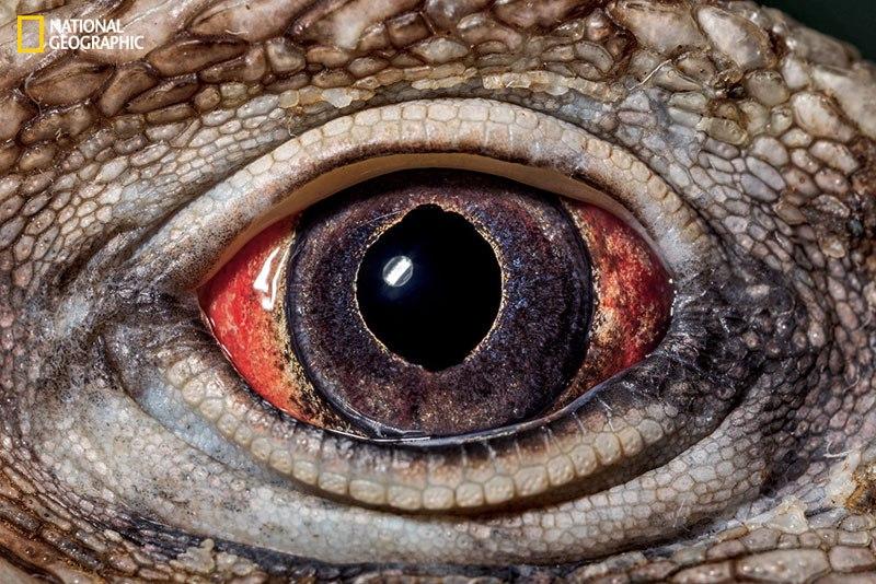 «Внутри глаза: наиболее изысканные творения природы»