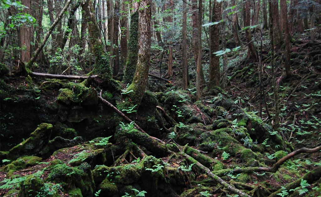 Лес Аокигахара, Япония