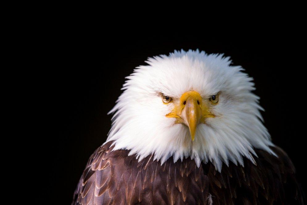 Почему орланов фотографируют в профиль?
