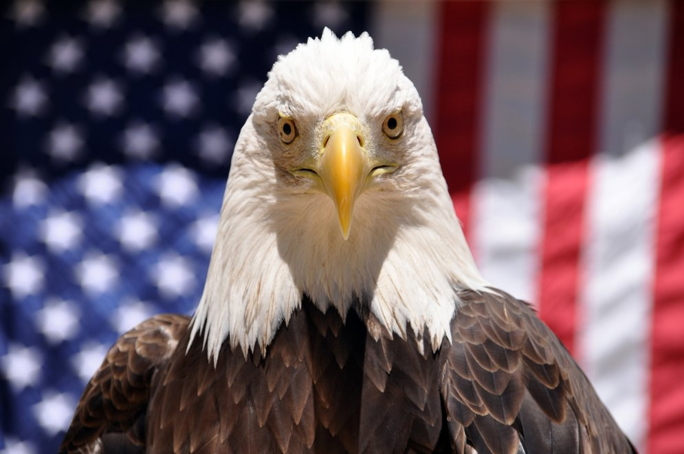 Denali, a 16-year-old California bald eagle, is seen at Six Flags Discovery Kingdom in Vallejo