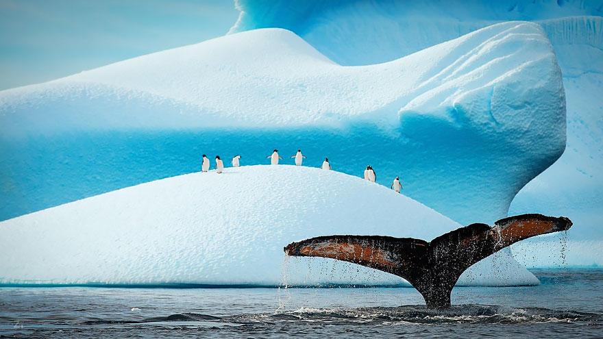 velichestvennye-foto-kitov-1